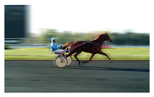 Labodrivers - Hippodrome de Vincennes 1 2008 - mini